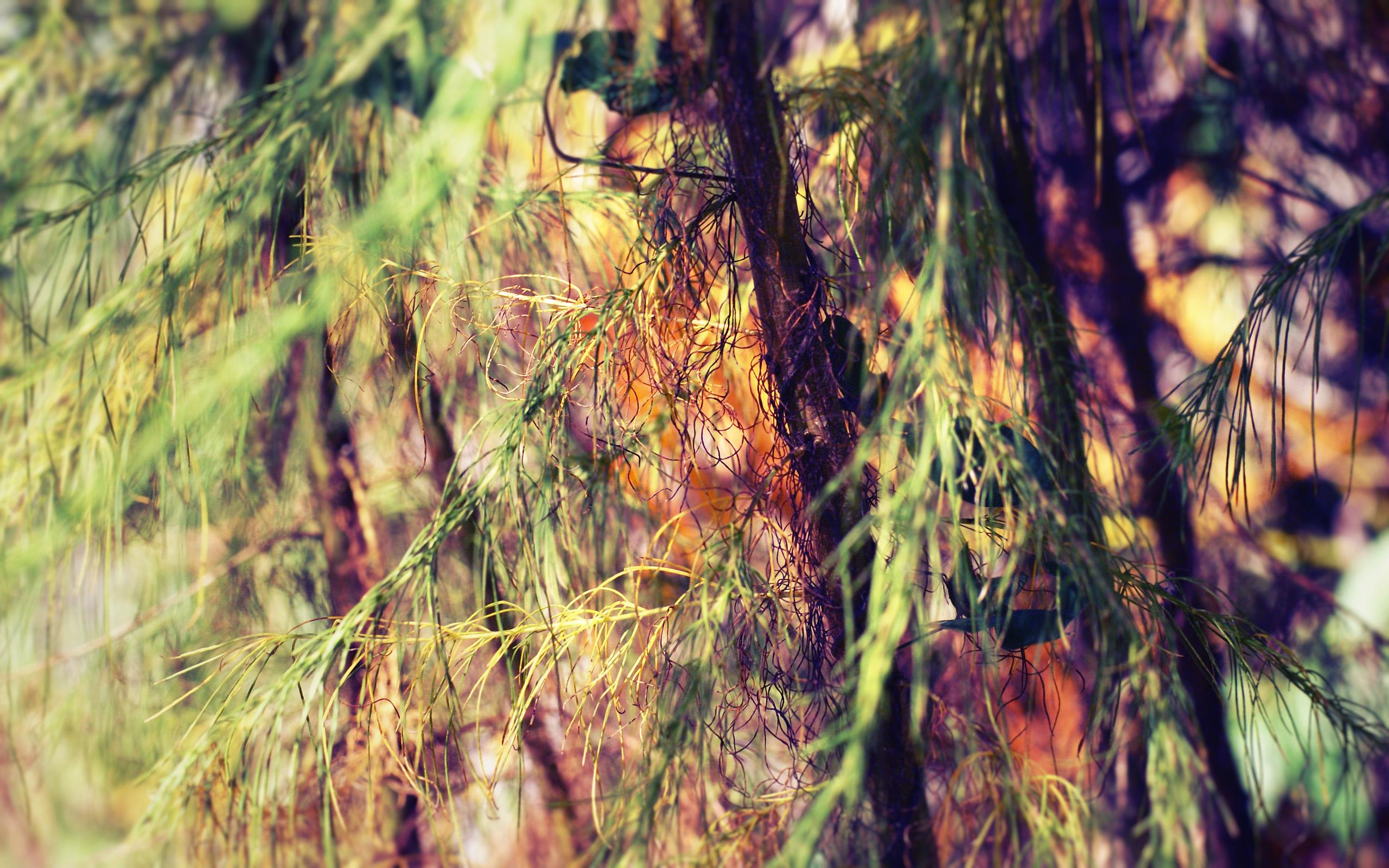 деревья природа ветка trees nature branch  № 439582 бесплатно