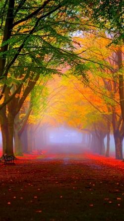 park fall fog foliage trees