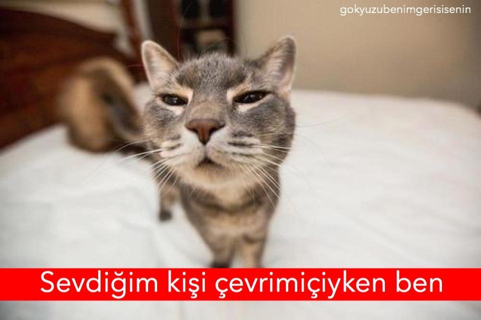 cat2 (1) - ryuklemobi