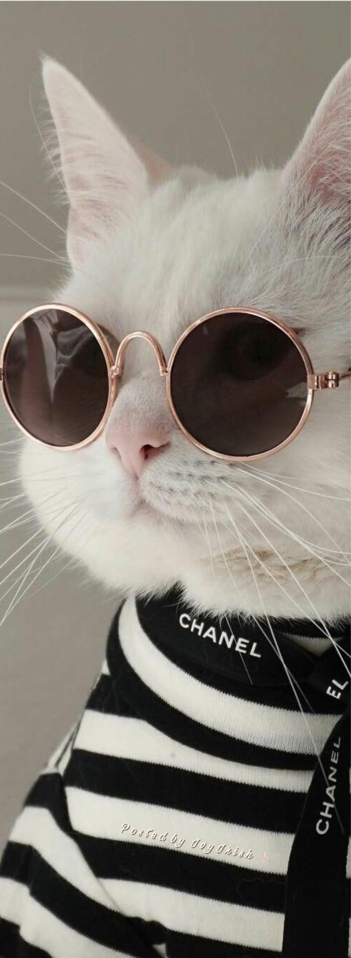 kedi (2)