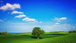 tree green summer blue sky